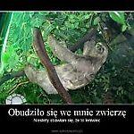 Zdjęcie użytkownika gelbkajka