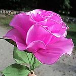 Zdjęcie użytkownika purpura