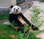 Zdjęcie użytkownika panda85